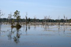 View of moat with dead trees  around Preah Neak Poan temple. Scene around the Angkor Archaeological Park. The site contains the remains of the different capitals Royalty Free Stock Photography