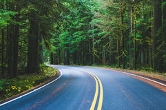 Scene of beautiful road to mt Rainier national park, United Stat Royalty Free Stock Photography