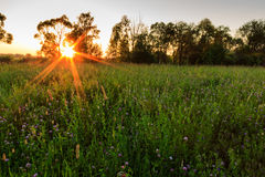 Scene of beautiful sunset at summer field with trees. Landscape Royalty Free Stock Photos