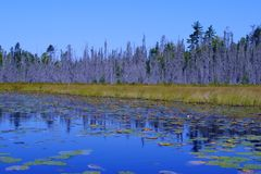 Scene from the Boundary Waters Royalty Free Stock Photos