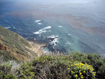 Scene from California Coast with Wildflowers and Kelp stock photo