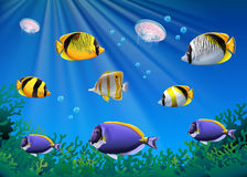 Scene with colorful fish swimming underwater Stock Photo