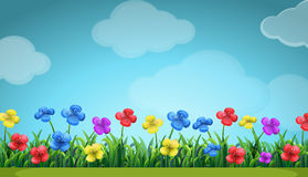 Scene with colorful flowers in the field. Illustration Royalty Free Stock Images