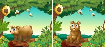 Scene con gli orsi e le api illustrazione vettoriale