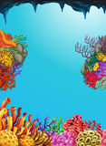 Scene with coral reef underwater Royalty Free Stock Photography