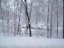 Scene della neve Fotografie Stock Libere da Diritti