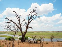 Scene of dried tree trunk on savannah sand ground with river landscape, blue sky and white cloud background, Chobe national park. Kasane, Botswana stock images