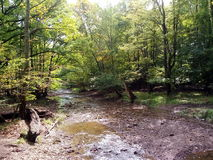 A scene from a forest in Ohio. Trees produce oxygen in one of the Cleveland Metroparks. The woods are green Royalty Free Stock Photo