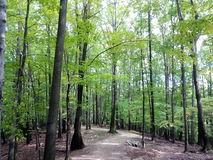 A scene from a forest in Ohio. Trees produce oxygen in one of the Cleveland Metroparks. The woods are green Stock Image