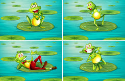 Scene with frogs on water lily Stock Photos