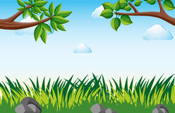 Scene with grass in garden. Illustration Royalty Free Stock Photography