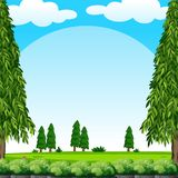Scene with green lawn and pine trees. Illustration Stock Photos