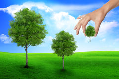 Scene of the hand plant tree on green grass. Royalty Free Stock Photography