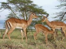 Scene from Kenya Stock Photo