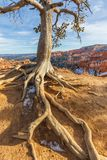 Bryce Canyon Utah Winter Landscape Stock Photography