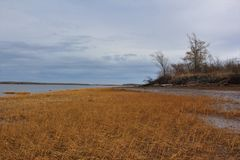 Dry brown sea grass on the mud flats of Wallace Bay in Nova Scotia on a grey November day. A scene from late autumn in Wallace Bay along the shoreline Royalty Free Stock Photography