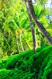 Tree scene in Maui of Palms and other vegetation. Scene on Maui of Palm trees and other vegetation on sunny day Stock Photo