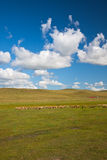 Scene of the meadow stock photos