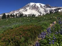 A scene from Mount Rainier in Washington state Royalty Free Stock Images