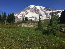 A scene from Mt Rainier in Washington state Stock Images