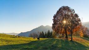 Scene of mountain pastures in autumn Stock Photos