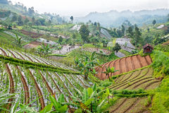 Scene in the mountains on East Java, Indonesia Royalty Free Stock Images