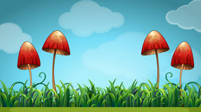 Scene with mushrooms in the field Royalty Free Stock Photography