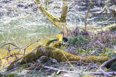 A scene of natural water. In a german forest in the tourist area Sauerland Royalty Free Stock Photos