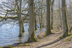 A scene of natural water. In a german forest in the tourist area Sauerland Royalty Free Stock Image