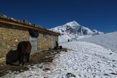 Scene near Thorung La Pass, Nepal Royalty Free Stock Photo