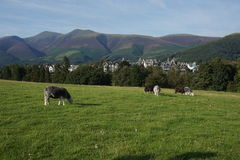 Scene of Northern UK Homes set in mountains and trees Stock Images