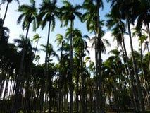 A scene from Parimaribo, Suriname Stock Image