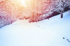Scene in the park on a winter day royalty free stock image