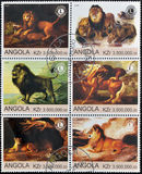 Scene a partire dalla vita dei leoni Fotografie Stock Libere da Diritti