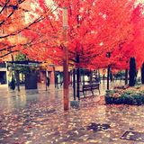 Scene of a pedestrian street with trees with red leaf and bench in autumn royalty free stock photo