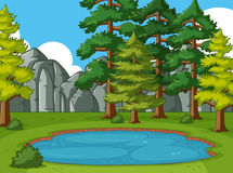 Scene with pine trees around the pond Royalty Free Stock Images