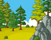 Scene with pine trees in the field Stock Photo