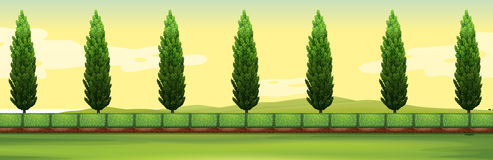 Scene with pine trees in the park Royalty Free Stock Photos