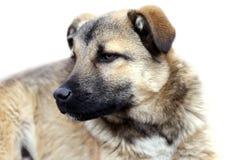 Puppy dog over white background Stock Photos
