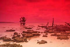A scene at rocky beach Stock Photography