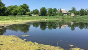 Scene with small pond at summer season in rural Ukrainian village. Pictorial quiet scene with small pond at summer season in rural Ukrainian village stock video footage