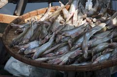 Fresh fish for sale in street market stock photo