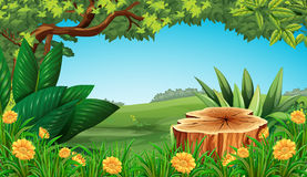 Scene with stump tree and field Royalty Free Stock Photo
