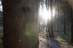 Photographing sun behind many trees royalty free stock photo