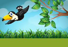 Scene with toucan flying in the field Royalty Free Stock Photography