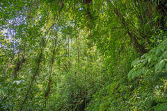 Scene with trees in the dense tropical rain forest Stock Image