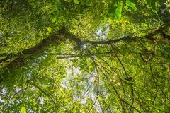 Scene with trees in the dense tropical rain forest Stock Photos