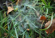 A scene vwith a beautifful Spider web on the green grass covered with dew in autumn cloudy day stock photos