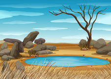 Scene with water hole in the field Royalty Free Stock Image