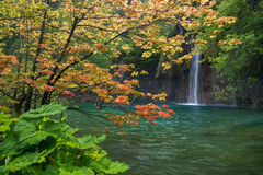 Scene with waterfall and orange maple tree Stock Photo